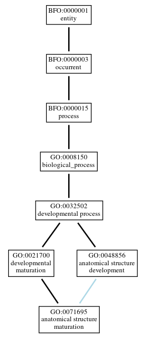 Graph of GO:0071695