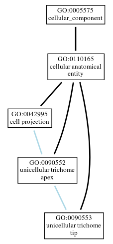 Graph of GO:0090553