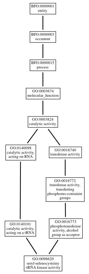 Graph of GO:0098620